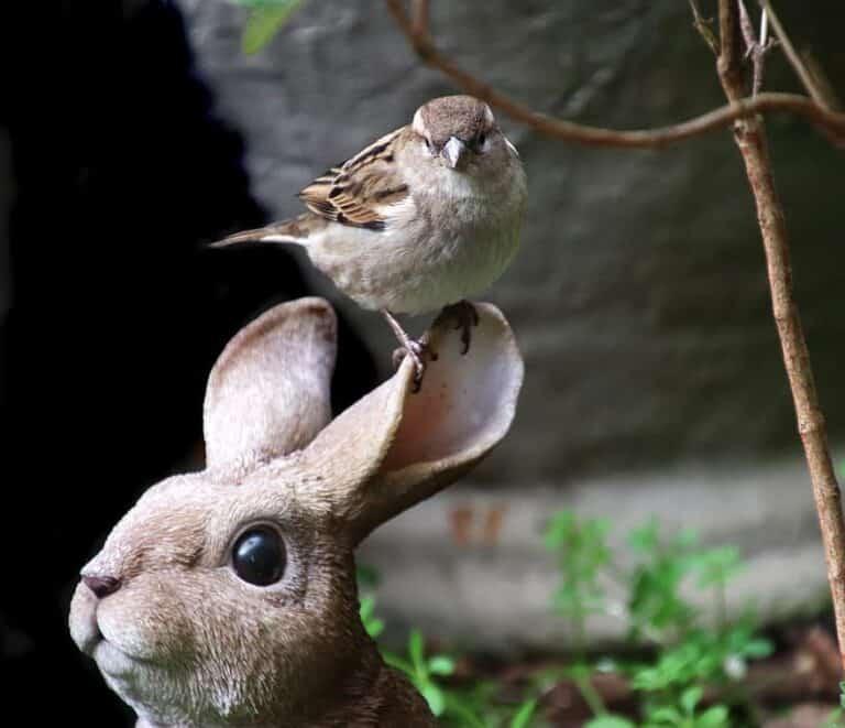 Zoogdieren in volière houden: ja of nee?