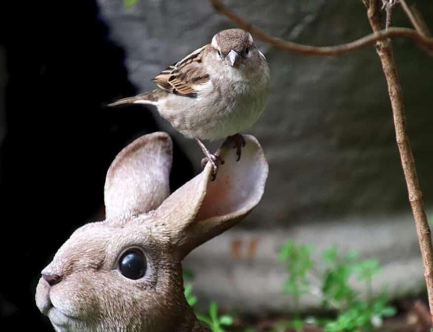 Zoogdieren houden in de volière: ja of nee?