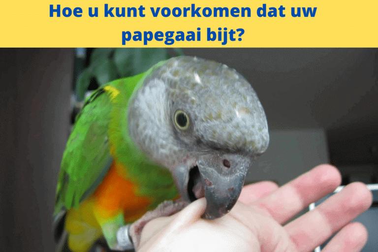 Hoe u kunt voorkomen dat uw papegaai bijt