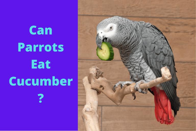 Mogen papegaaien komkommer eten?