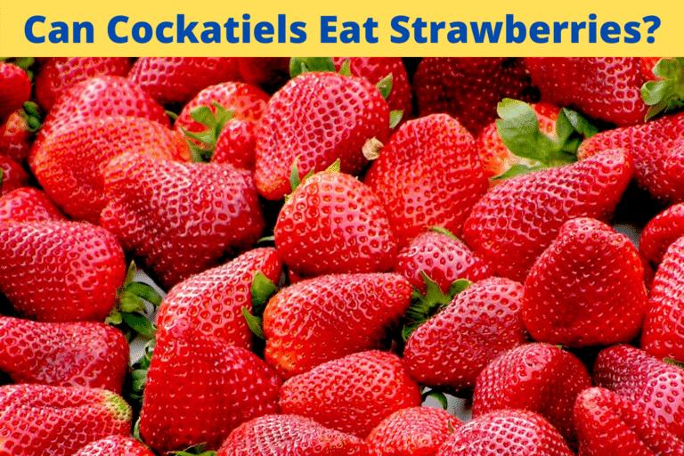Kunnen Valkparkieten Aardbeien Eten?