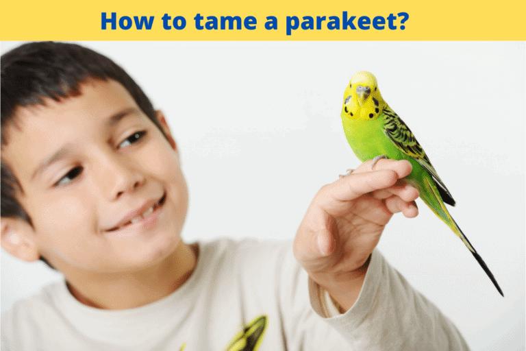 How to tame a parakeet